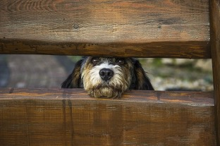 dog-1340327_640.jpg