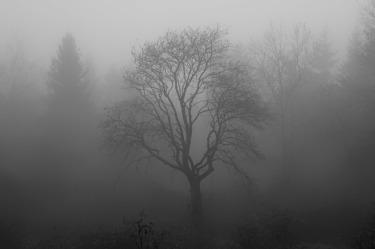 tree-1031814_1920