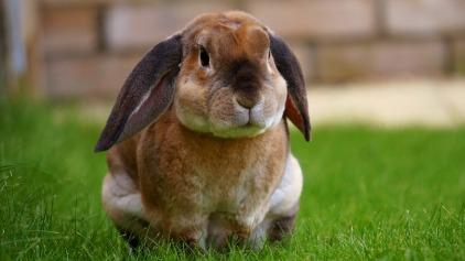 rabbit-1422882_1280