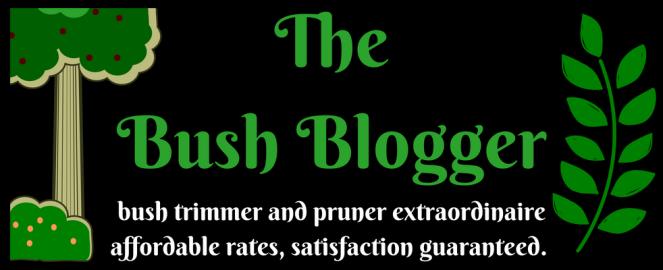 bush blogger satis