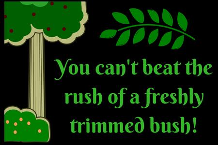 bush rush