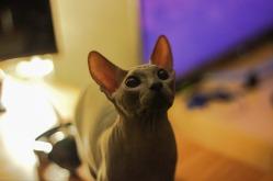 bcat1
