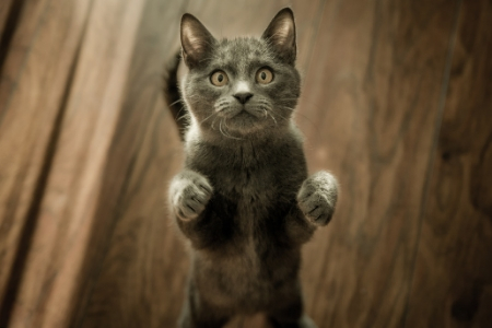 begging pussy
