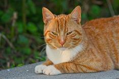 cat-3553784_640