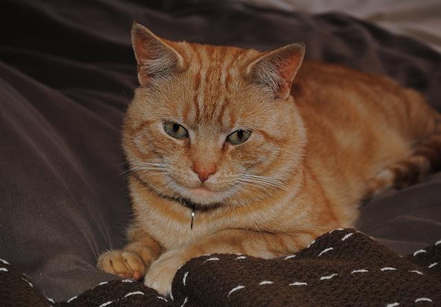 cat-72853_640
