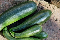 courgettes-1609888_1280